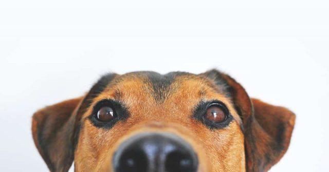 Bien choisir une mutuelle santé pour son chien